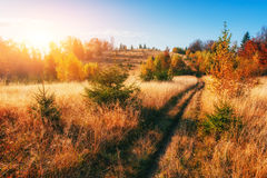Forest Road in the autumn. Landscape. Ukraine. Europe Stock Images