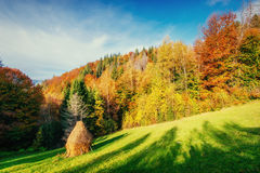 Forest Road in the autumn. Landscape. Ukraine. Europe Stock Photography