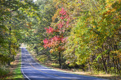 Forest road in autumn Stock Image