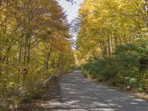 Forest Road. Autumn forest road shoot outside Royalty Free Stock Image