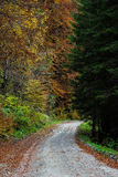 Forest Road in Autumn Royalty Free Stock Photography