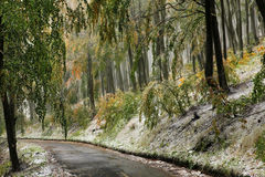Forest road in autumn Royalty Free Stock Photos