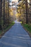 Forest road autumn sunny morning. Russia. Moscow region.  stock photography