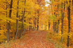 Forest road in the autumn Stock Photography