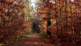 Forest road through an autumnal forest stock footage