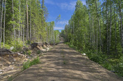 Forest road away into the distance. Royalty Free Stock Images