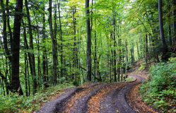 Forest road. Beautiful country road that runs along a forest in the mountains. It is autumn. Fallen leaves lie on the road Stock Photos
