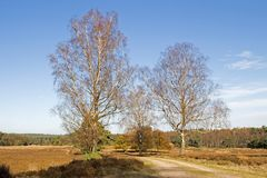 Forest road with birches in the Loenermark Royalty Free Stock Photo