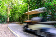 Forest road with car motion blur Stock Photos