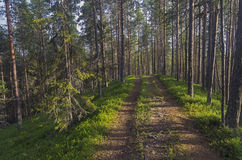 Forest road climbs the hill. Royalty Free Stock Photo