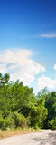 Forest road. And cloude blue sky Royalty Free Stock Photography