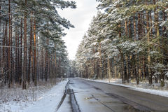 Forest road on a cloudy winter day Stock Photo