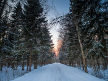 Forest road on a cold winter evening Royalty Free Stock Photo