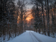 Forest road on a cold winter evening Royalty Free Stock Image