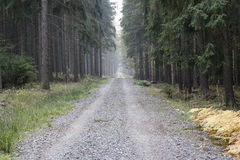Forest Road In The Coniferous Woodland Stock Photo