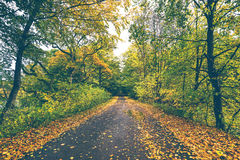 Forest road covered with autumn leaves. In a forest in the fall in beautiful colors in autumn Royalty Free Stock Photo