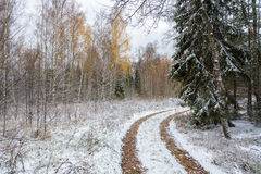 Forest road, covered with the first snow. Green spruce in the interior of white snow Royalty Free Stock Photos