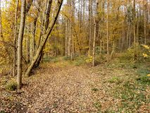 The forest autumn royalty free stock images