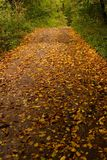 Forest road covered with leaves Royalty Free Stock Photos