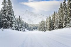 Forest Road Covered vuoto in neve fresca fotografie stock