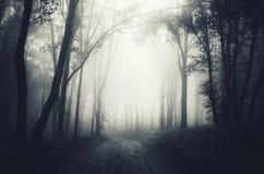 Forest road through the dark fog Stock Photo