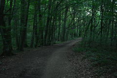 Forest Road. Through dense forest Stock Photo