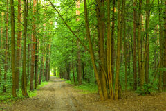 Forest and the road Royalty Free Stock Photography