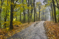 Forest road. Deserted forest road autumn misty morning in the middle of a beech forest Royalty Free Stock Image