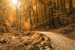 Forest road. Dirt road in autumn forest Stock Photos
