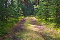 Forest road. Royalty Free Stock Images