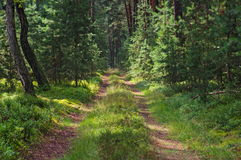 Forest road. Stock Photography