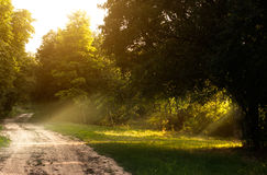 Forest Road. Dirtry summer forest road and sun rays Stock Photography