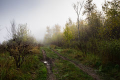 Forest road. Disappearing into the morning mist Royalty Free Stock Images