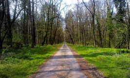 Forest road. Drive Royalty Free Stock Photo