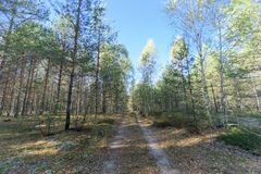 Forest road in early autumn. Trees wall stand to the left and right of the road. Forest road in early autumn. Trees with green leaves wall stand to the left and royalty free stock images