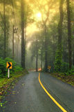 Forest road in early foggy morning with visible sun rays. Stock Photo