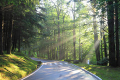 Forest road in the early morning Stock Photo