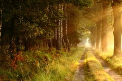 Forest road 3. Forest road in the early morning sun rays Stock Photography