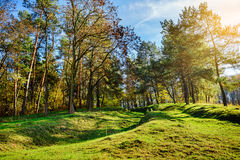 Forest Road en el otoño Autumn Landscape ucrania europa imagen de archivo