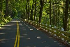Forest Road en Oregon Imagen de archivo