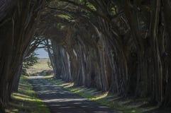 Forest Road encantado foto de stock