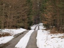 Forest road at the end of winter. South Bohemia royalty free stock photography