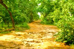 Forest road environment nature beauty. Forest nature environment garden natural royalty free stock image