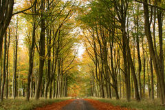 Forest Road in Fall. A beautiful scene of a road going through a forest in the fall Stock Images