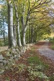 Forest Road at Fall Stock Photo