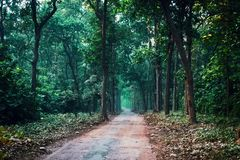 Forest road through Fall foliage. Safari in the national Park royalty free stock image