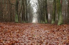 Forest road in the fall. Royalty Free Stock Images