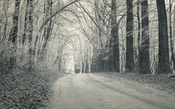 Forest road with first frost in December. Stock Photography