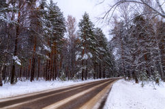 Forest Road. The first snow dropped in the forest Royalty Free Stock Photography