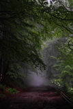 Forest road in fog. Foggy and rainy summer day in the forest Royalty Free Stock Image